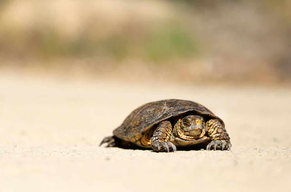 update-web-design-in-2020-turtle